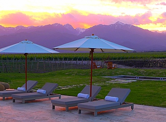 Vines of Mendoza