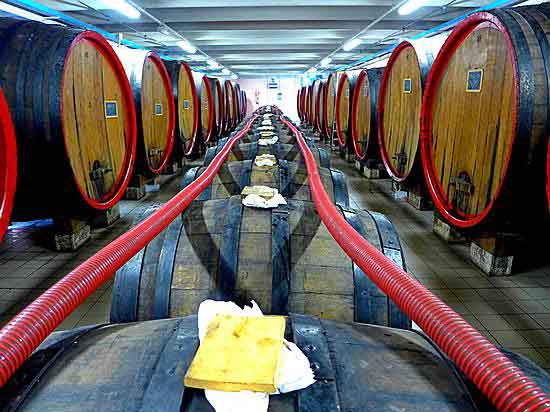 Aging barrels at Antichi Colli, Castelnuovo, Modena