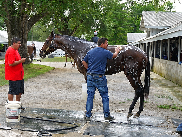 Washing down horse after workout at Keeneland