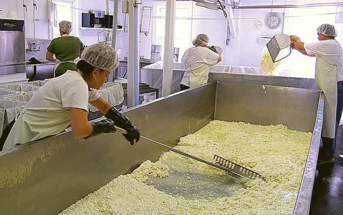 Raking curd at Crowley Cheese in Healdville, Vermont
