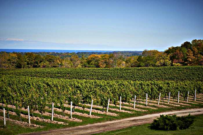 vineyards in Ontario