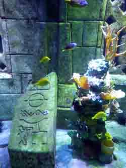 """Underwater """"dig"""" at Atlantis"""