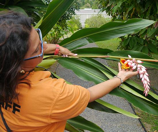 Ana Svoboda shows ginger at Blue Harbor Tropical Arboretum, part of an Oceania shore excursion