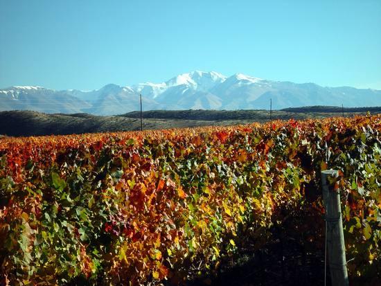 Bodegas Caro vineyard
