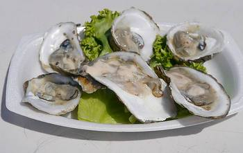 Connecticut bluepoint oysters
