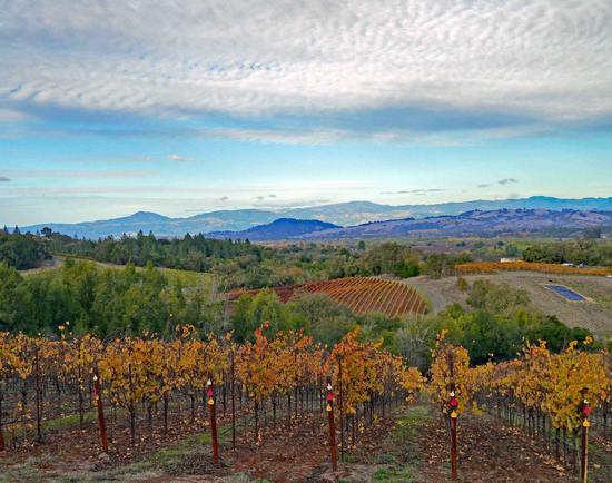 Thomas George evokes Burgundy in Russian River