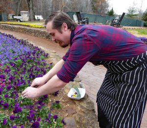 Evan Babb clips pansies for salad at Rice House at Barnsley Resort