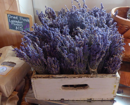 lavender bunches at Lavender by the Bay