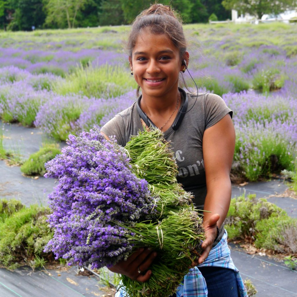 Lavender and chevre speak French on the North Fork