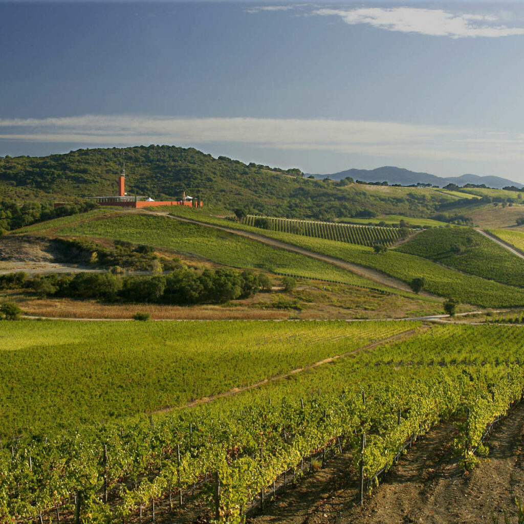 Maremma Toscana DOC: Tuscany's next great wines